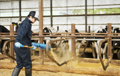 【Hokkaido】Dairy Farmer and Domestic Animal Inseminator